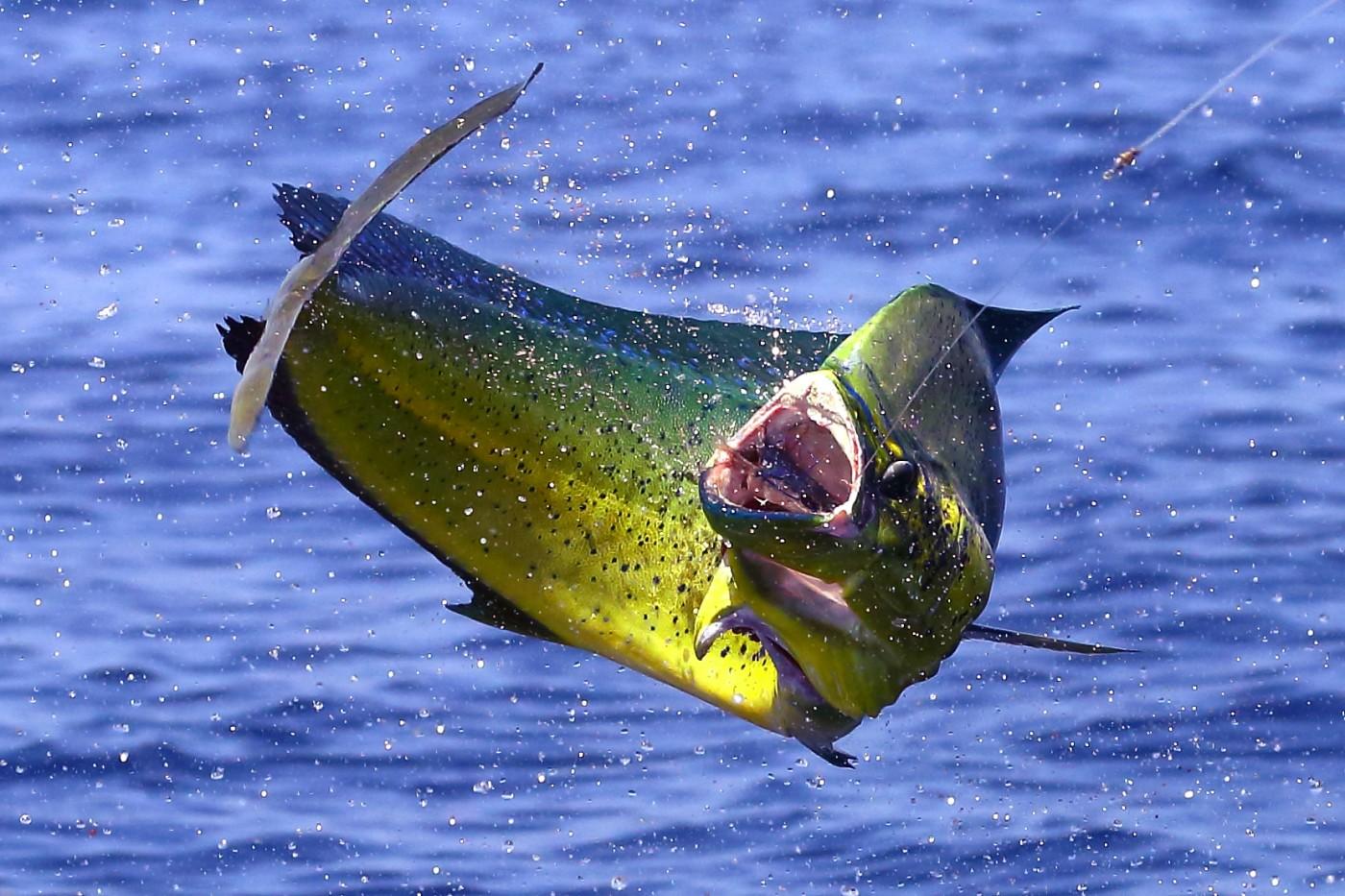 Gulf Coast Fishing Spots for Offshore Fishing
