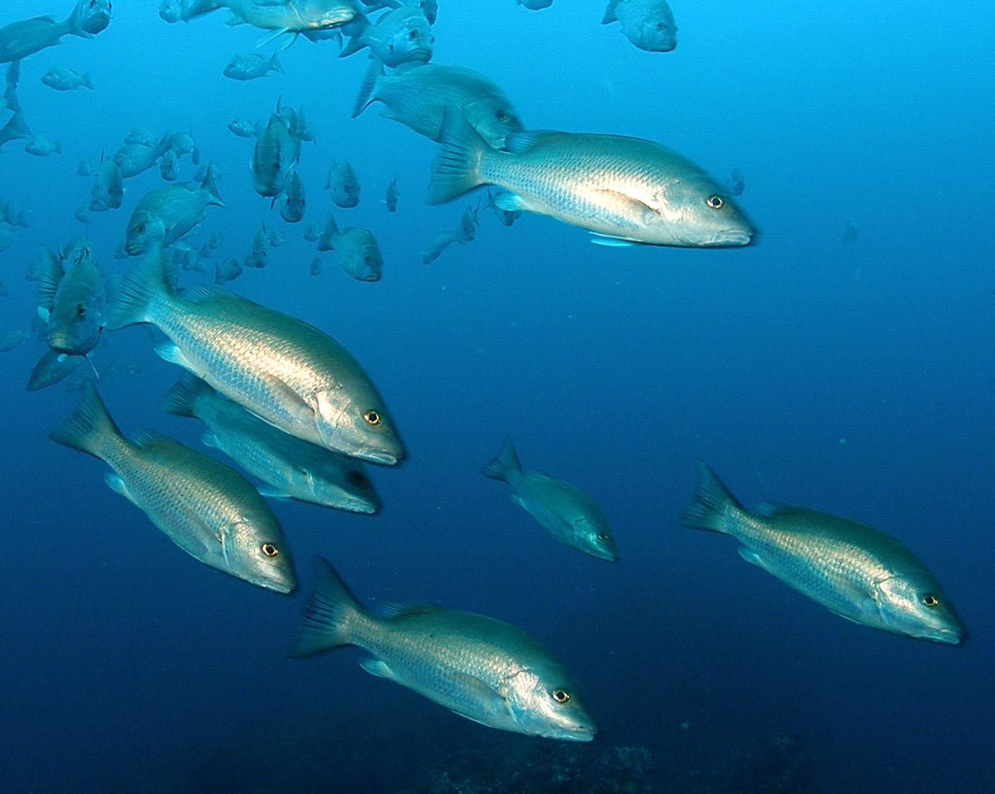 Snapper Fishing Spots in the Gulf - GPS Fishing Maps